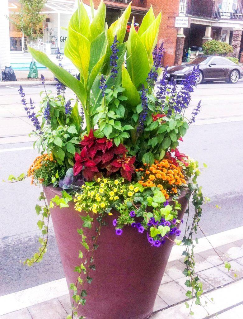 Award-winning gardening brightens your BIA